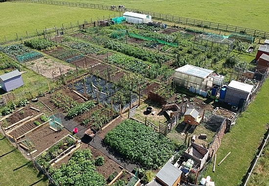 aerial image of Walton allotments