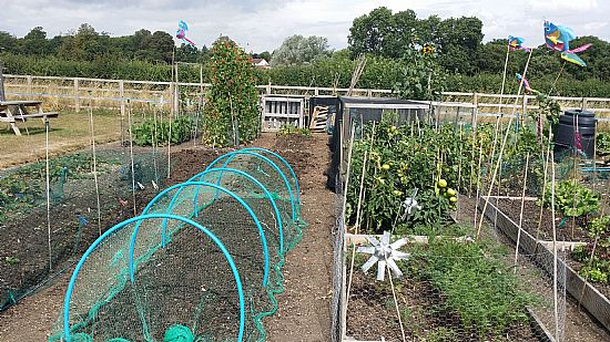 view of an allotment plot